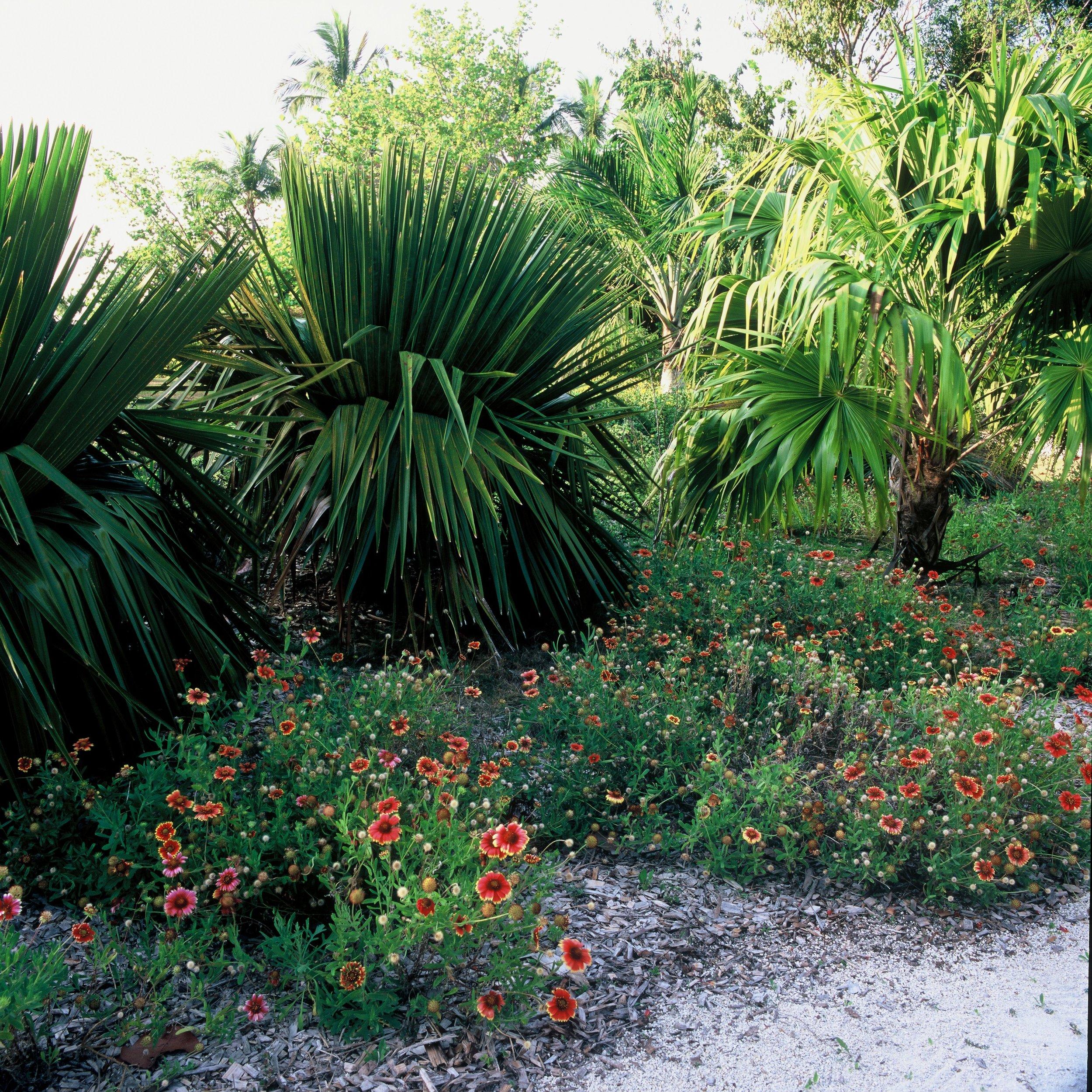 Casa Morada Plant Creations