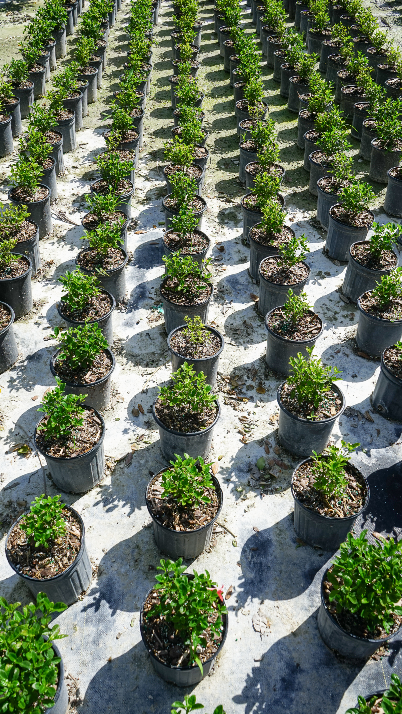 Plant Creations Inc. Nursery  (5 of 92).jpg