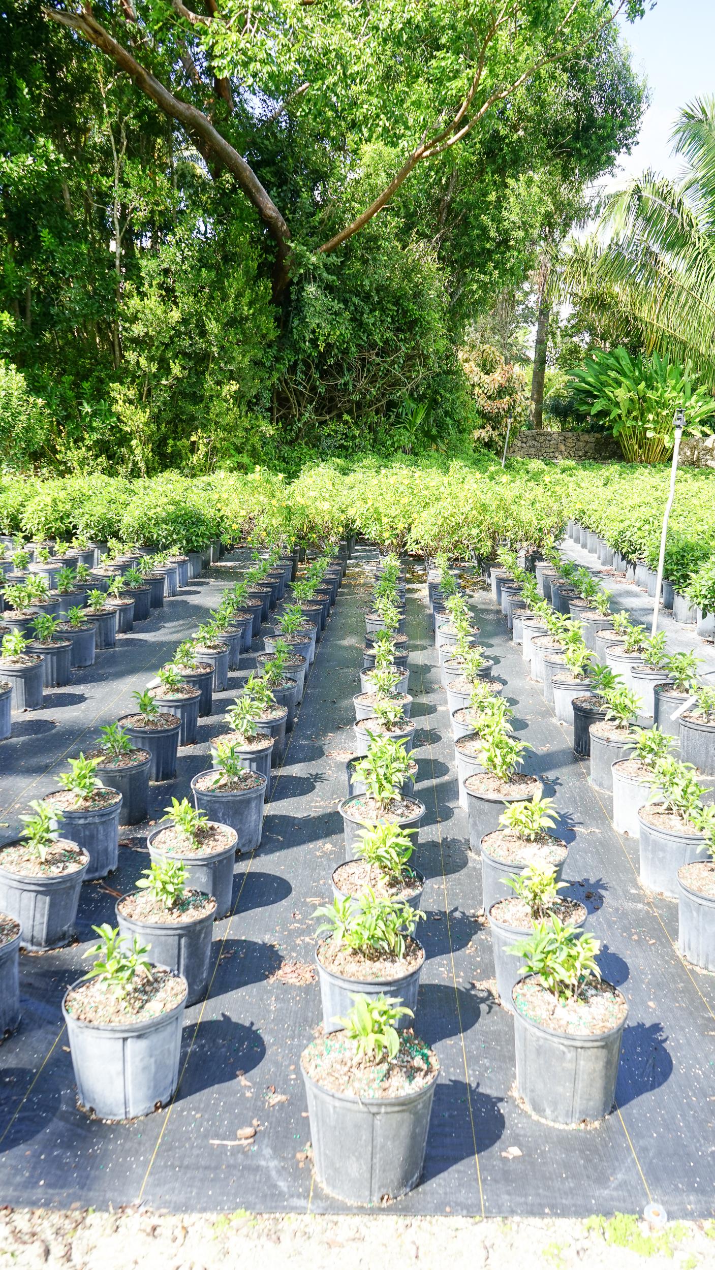 Plant Creations Inc. Nursery  (3 of 92).jpg