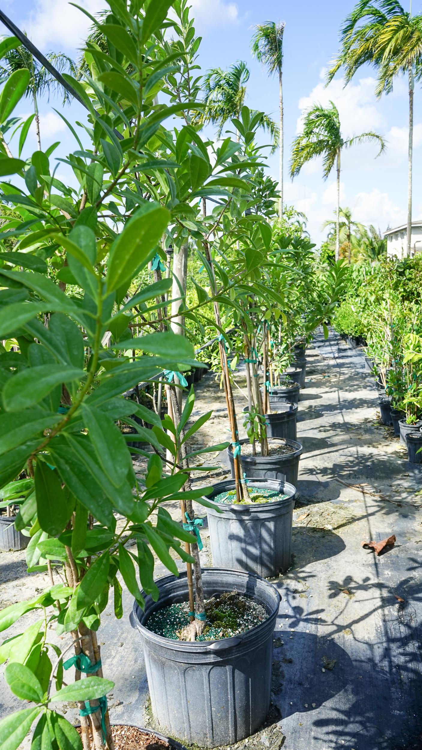 Plant Creations Inc. Nursery  (6 of 92).jpg