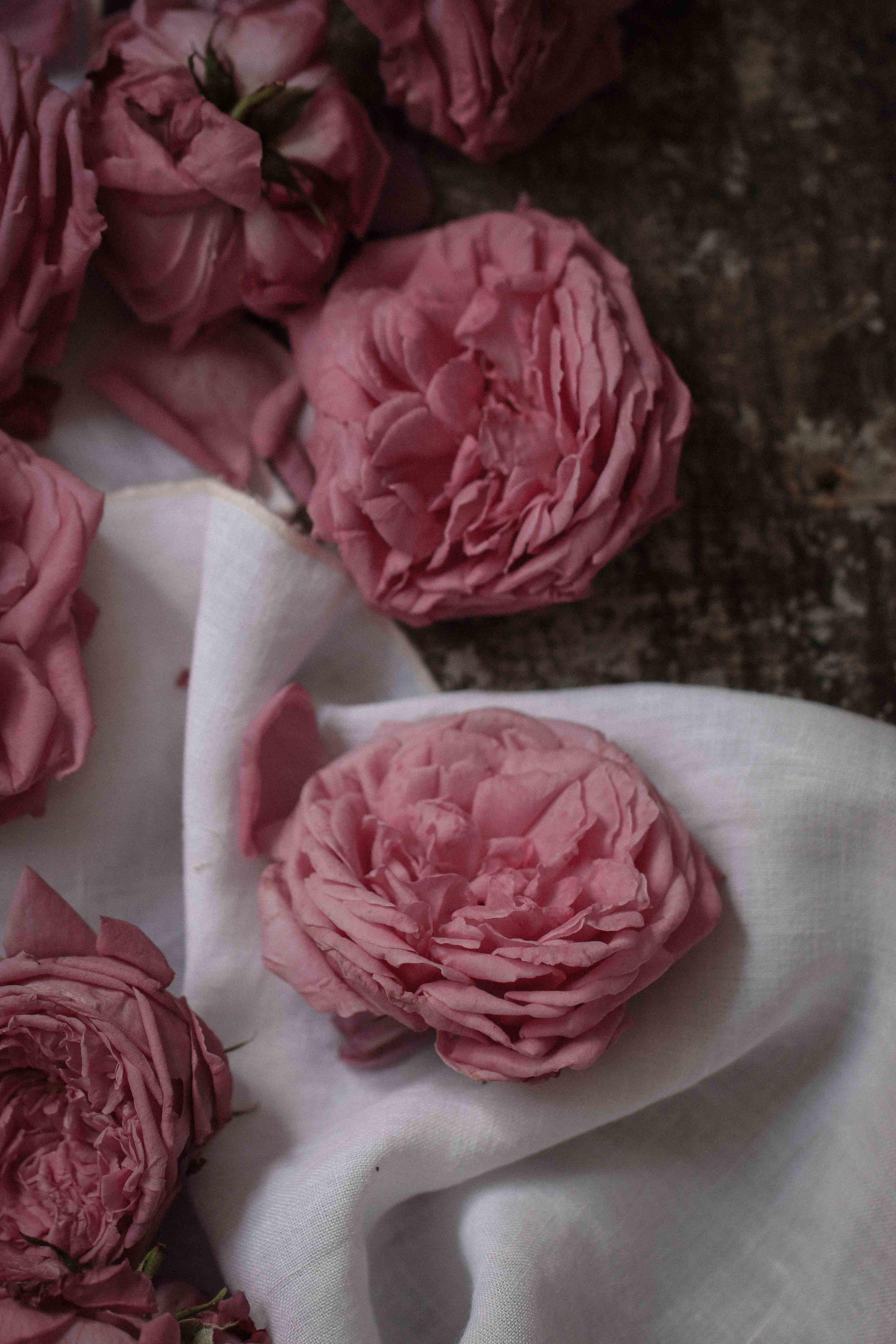 rose_sherbet-22.jpg