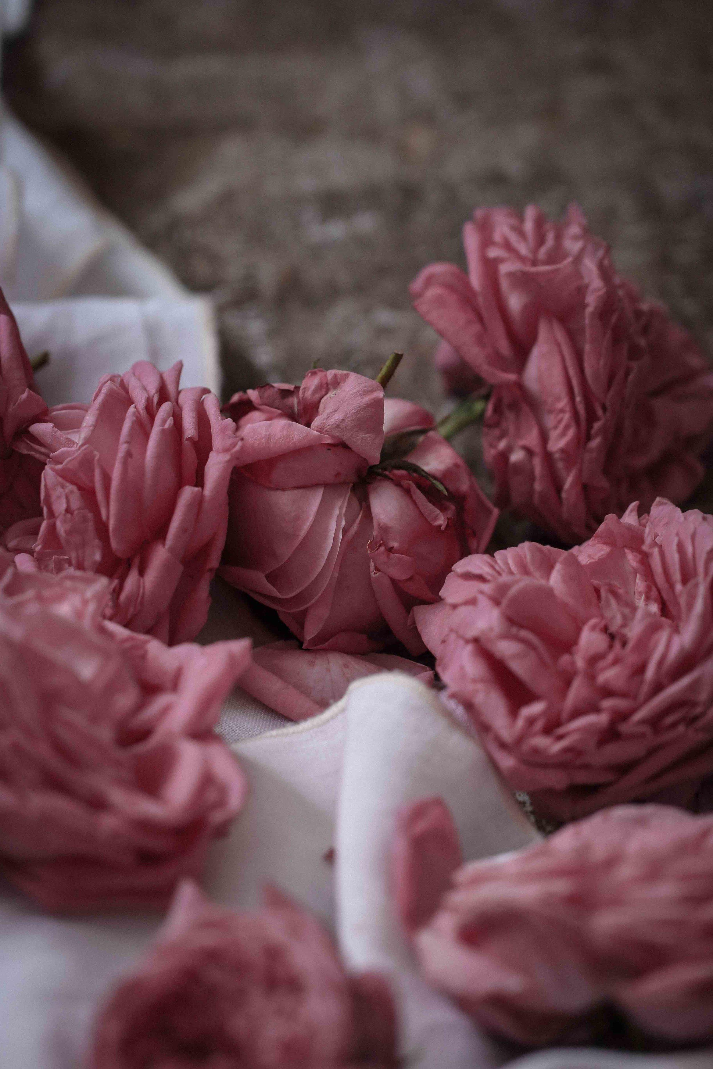 rose_sherbet-23.jpg