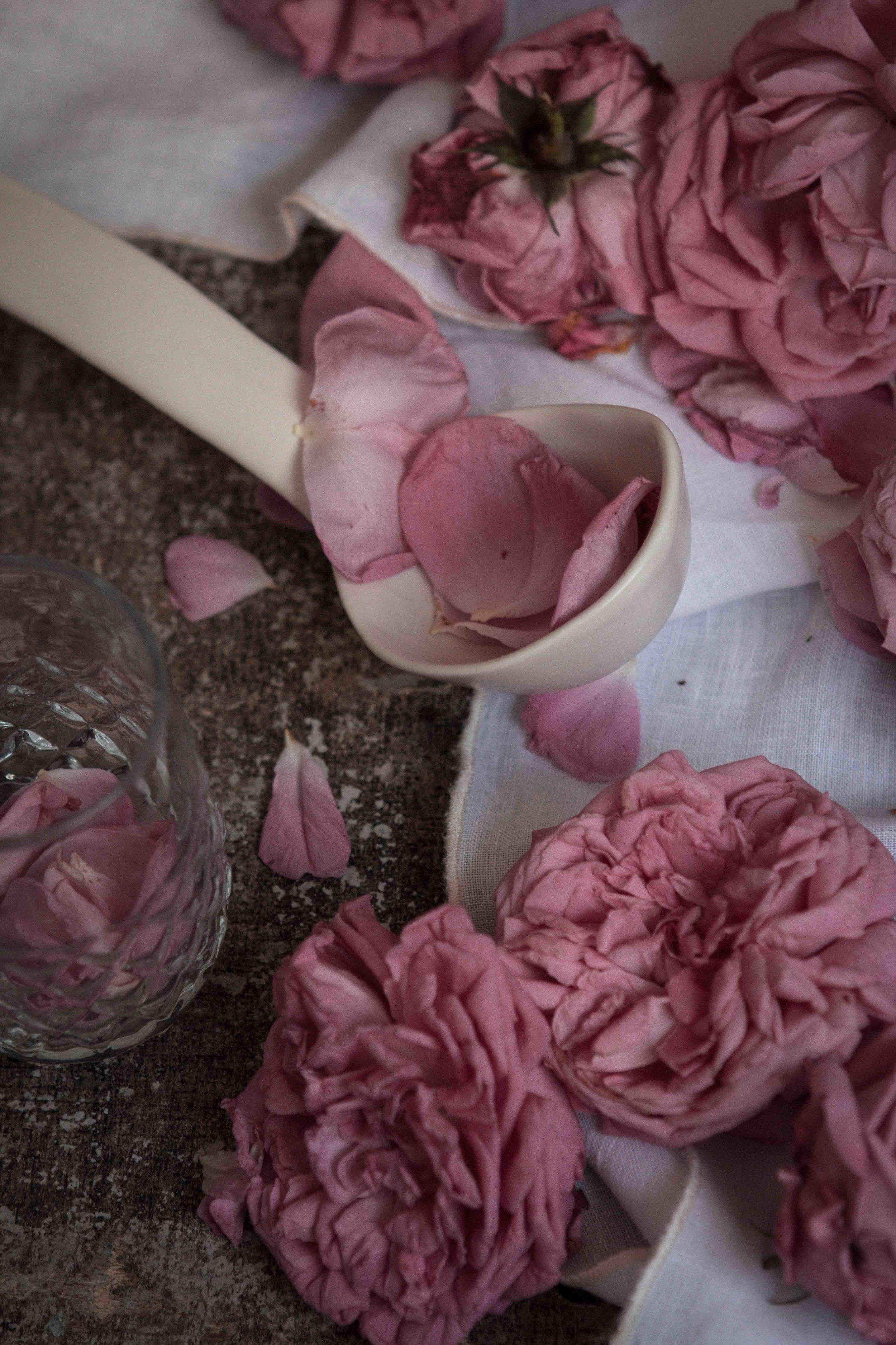 rose_sherbet-31.jpg
