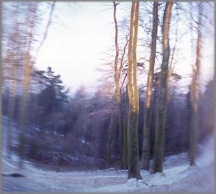 art-in-hospitals-winter-woodland