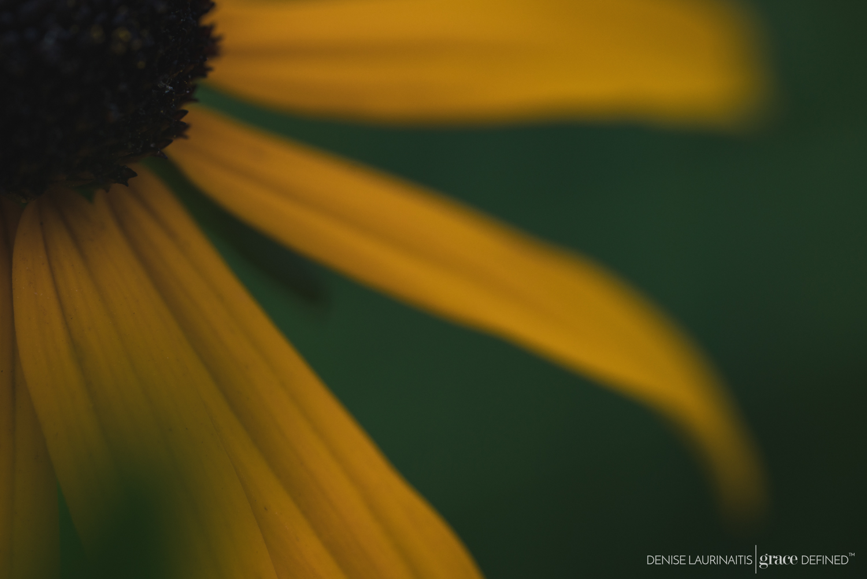 Denise Laurinaitis Grace Defined Photography Macro Blog