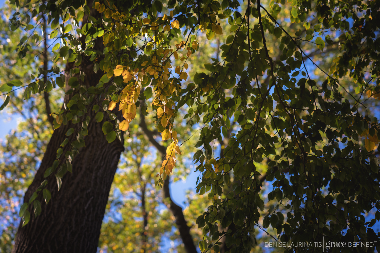 Denise Laurinaitis Grace Defined Photography Grace Project October Seasons Part 4