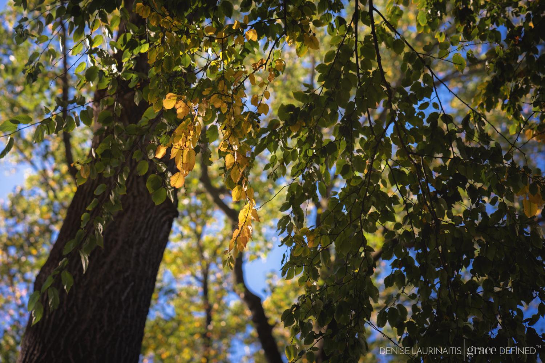 Denise Laurinaitis Grace Defined Photography Grace Project 365 November Seasons Part 4