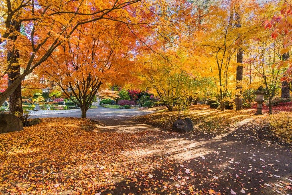 Grace Project 365 October Orange Winner Kathy Davis Linford