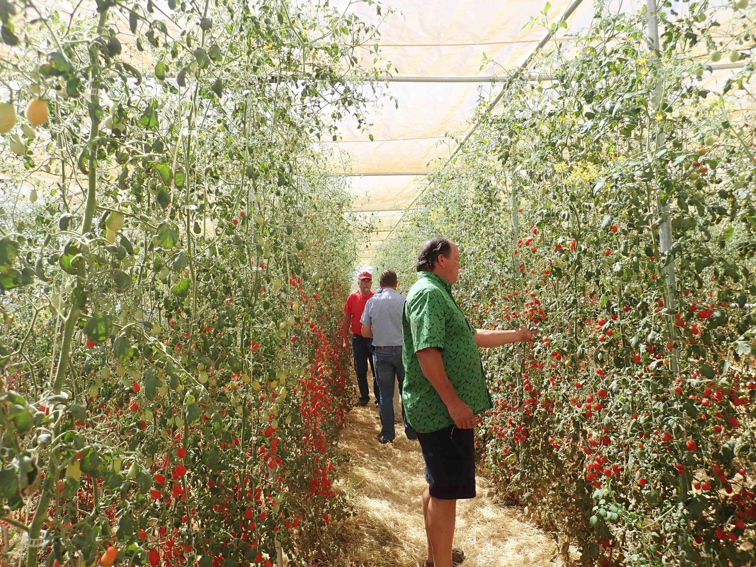 Sakata greenhouse.jpg