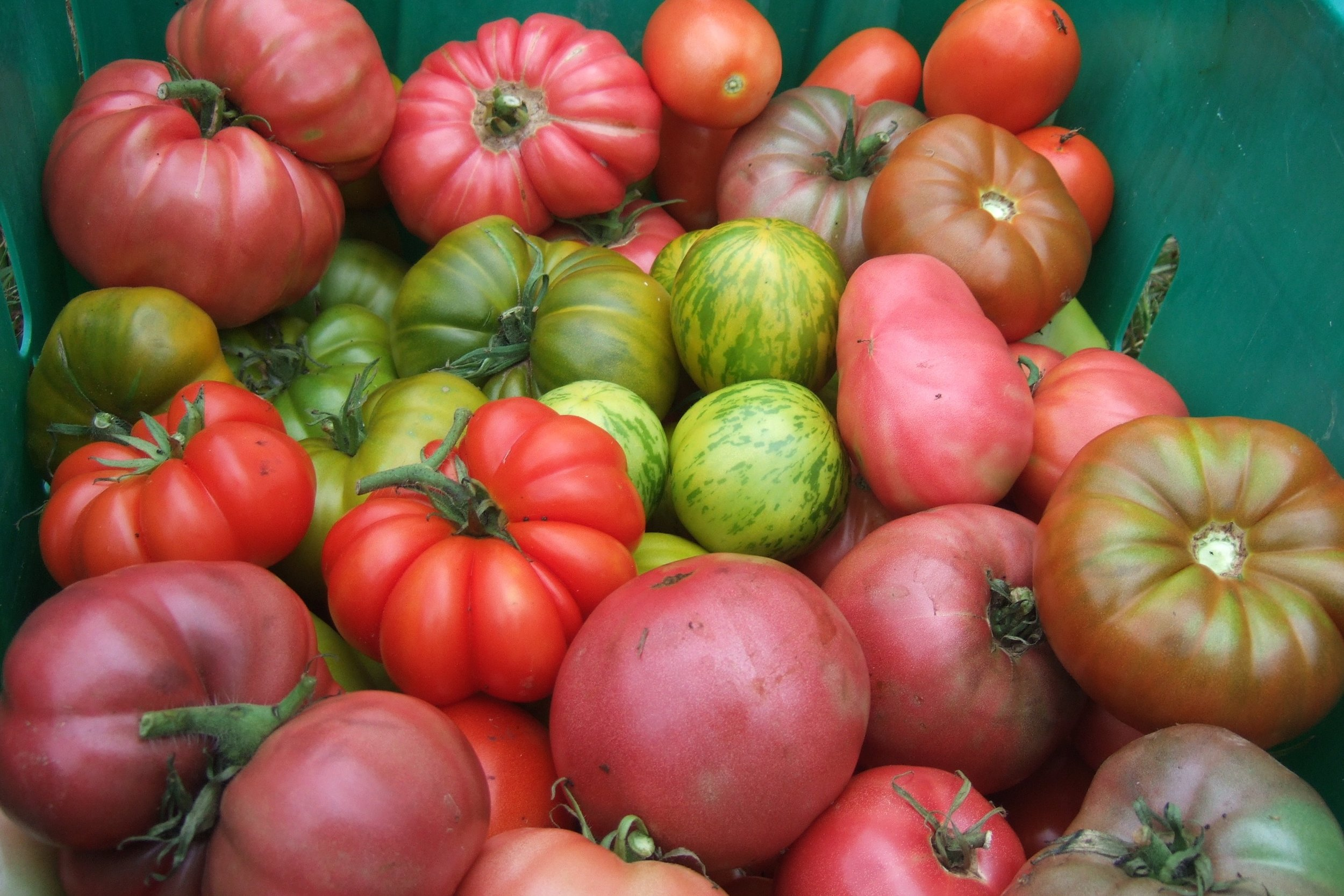 Heirloom vegetables often have unique colors, flavors, and shapes.