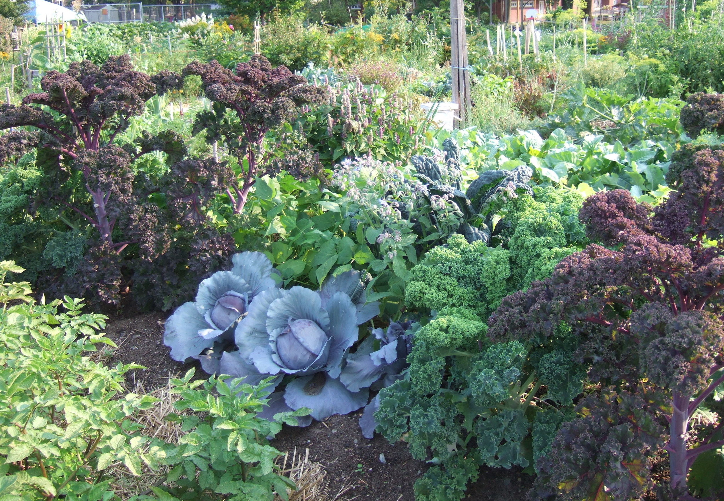 A 2008 national Gardening Association study estimated that U.S. food gardening households spent an average of $70 a year on their gardens. With a yield of about 1/2 pound of produce per square foot, an average 600-square-foot garden can produce 300 pounds of produce worth $600!