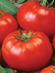 Irish eyes tomato Willamette.jpg