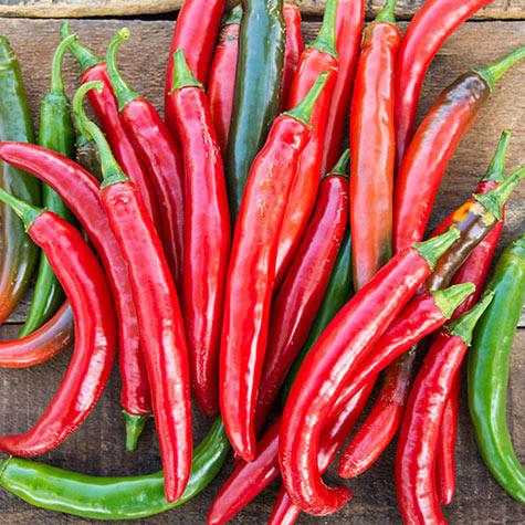 Gurney Pepper Salsa hyb.jpg
