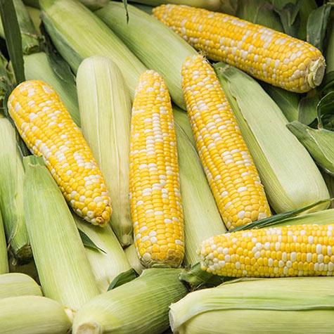 Gurney corn Simply Irresistible.jpg