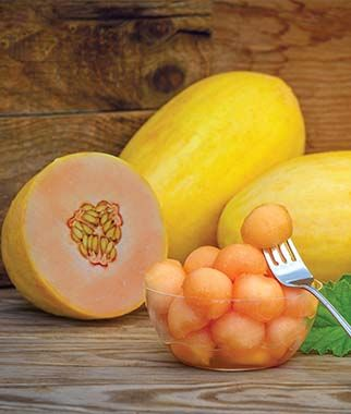 Burpee melon Mango.jpg