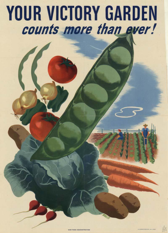Victory-garden WW2.jpg
