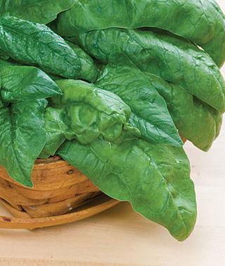Bloomsdale spinach burpee.jpg