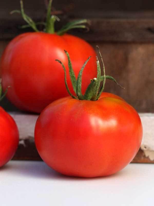 marglobe sustainable seed.jpg