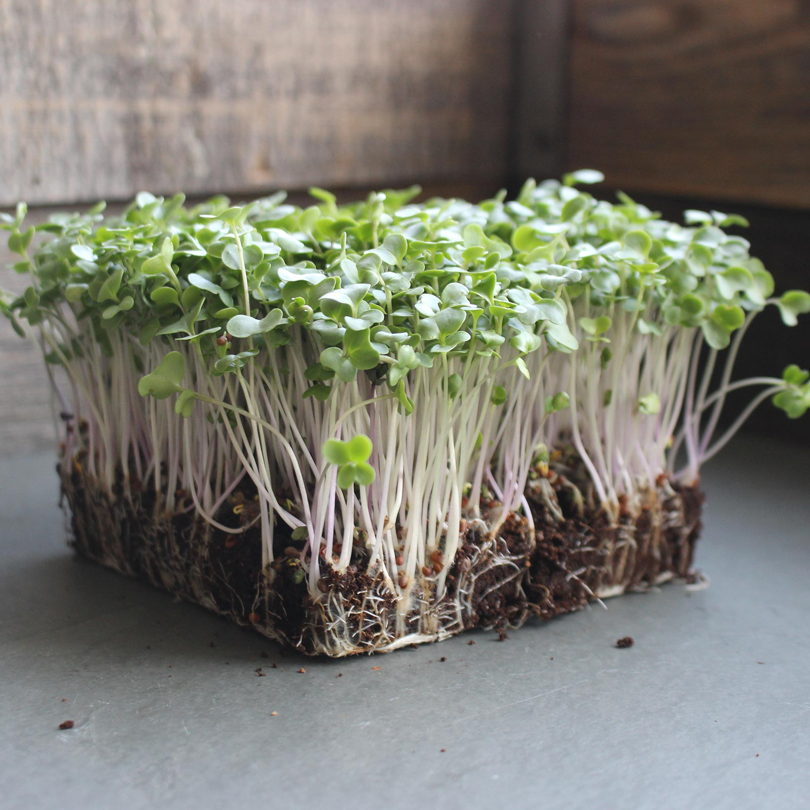 Broccoli microgreens have high concentrations of minerals—higher than mature broccoli.