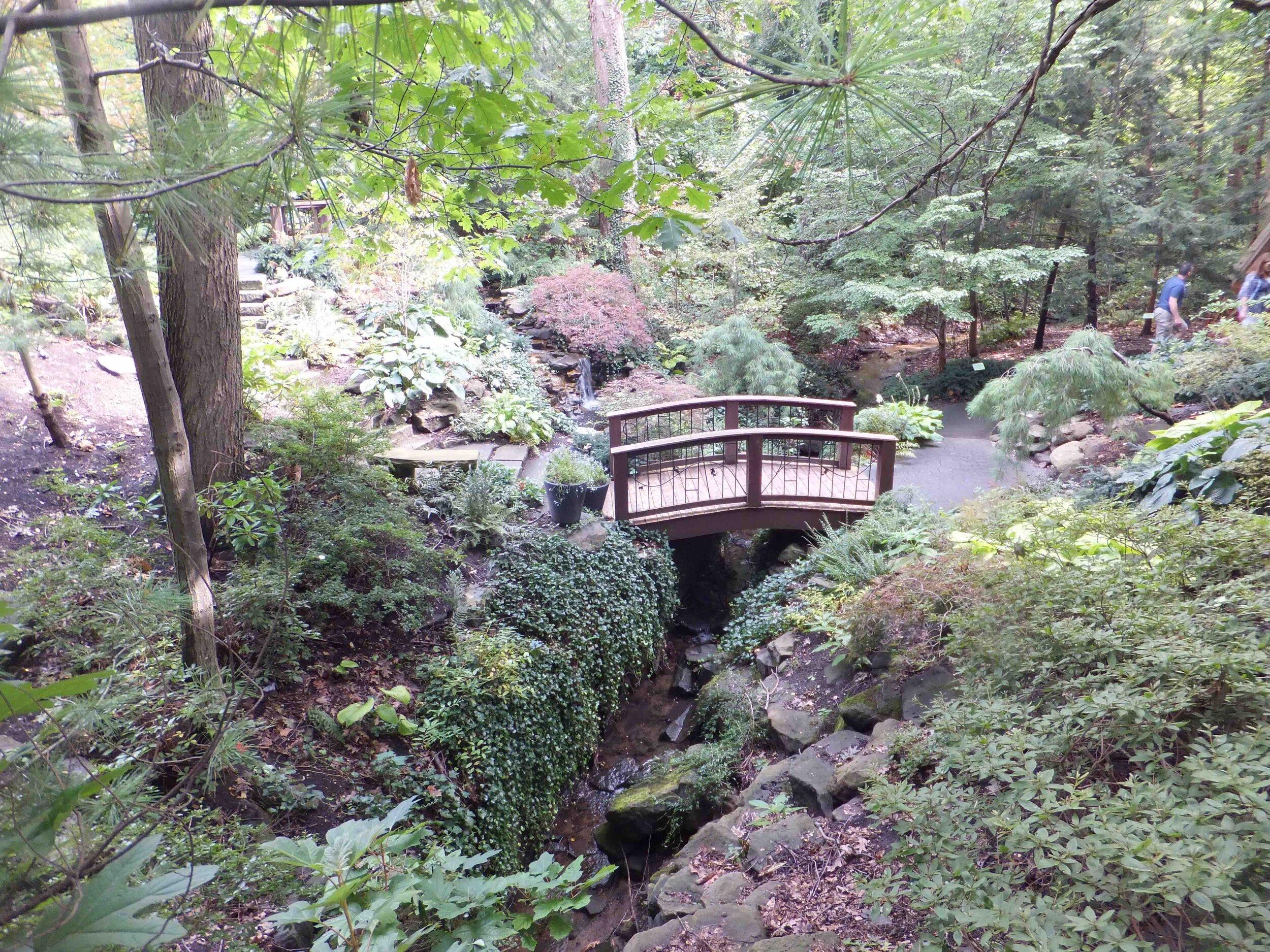 Cleveland Botanical Woodland gdn copy.jpg