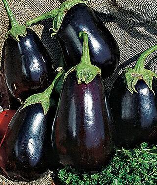 eggplant Black Beauty.jpg