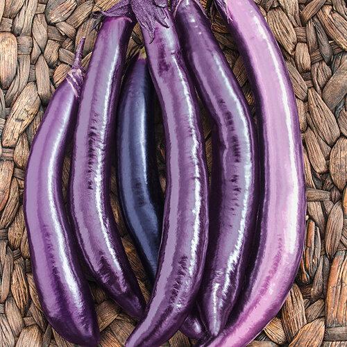 eggplant Ping Tung long.jpg