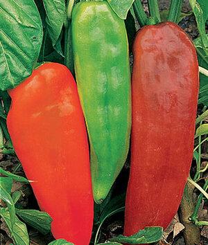 pepper corno di Toro.jpg