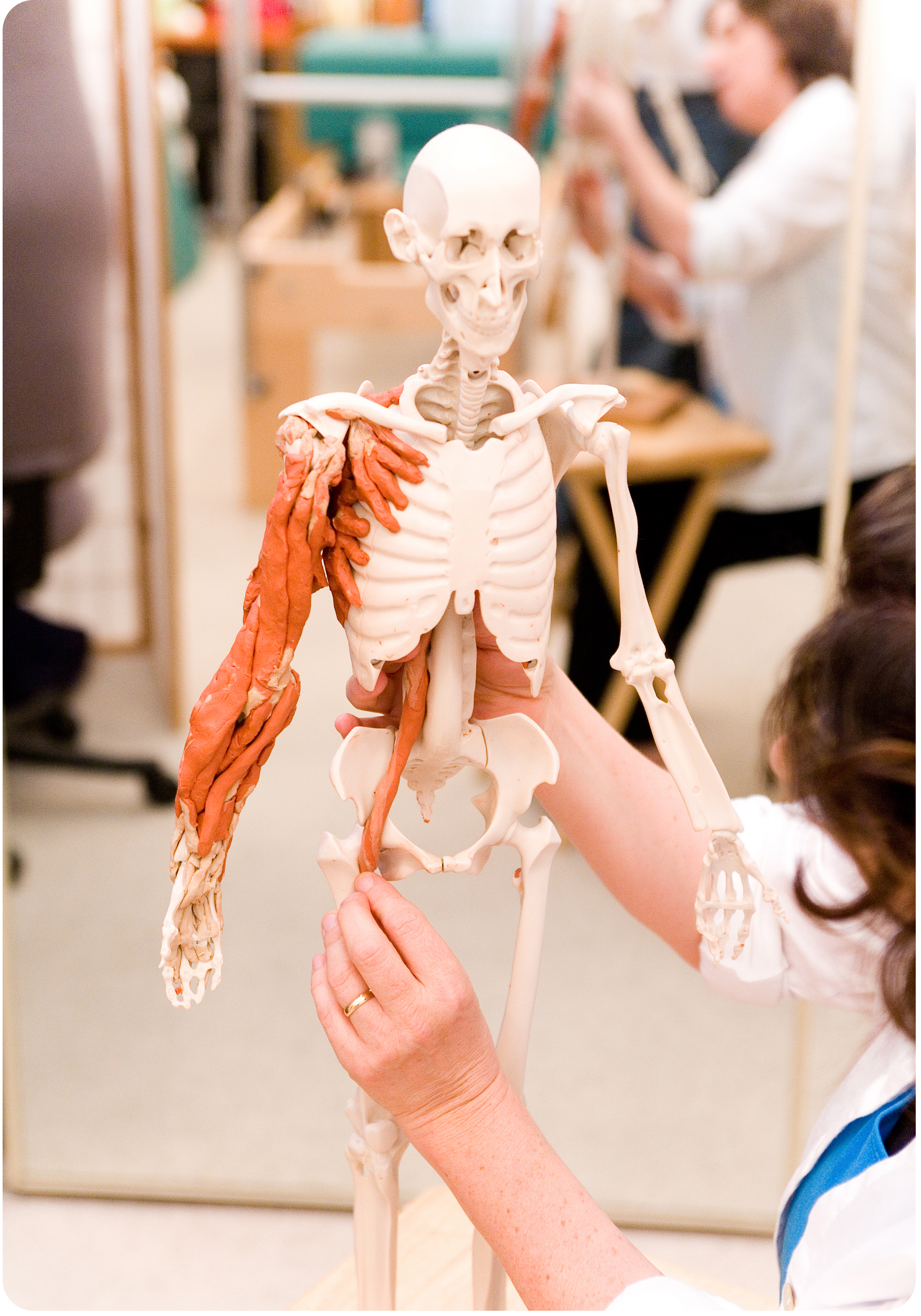 anatomy in clay image