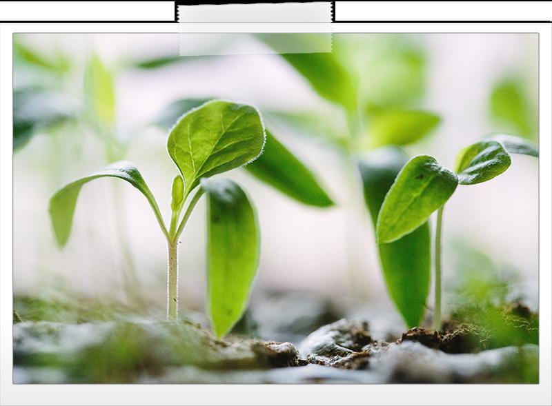seedlings-growth.png