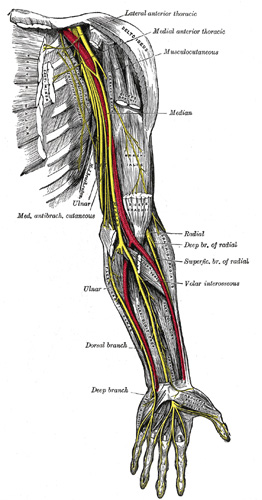 The  flexor digitorum superficialis  and the  pronator teres  can both entrap the median nerve and cause carpal tunnel syndrome symptoms.