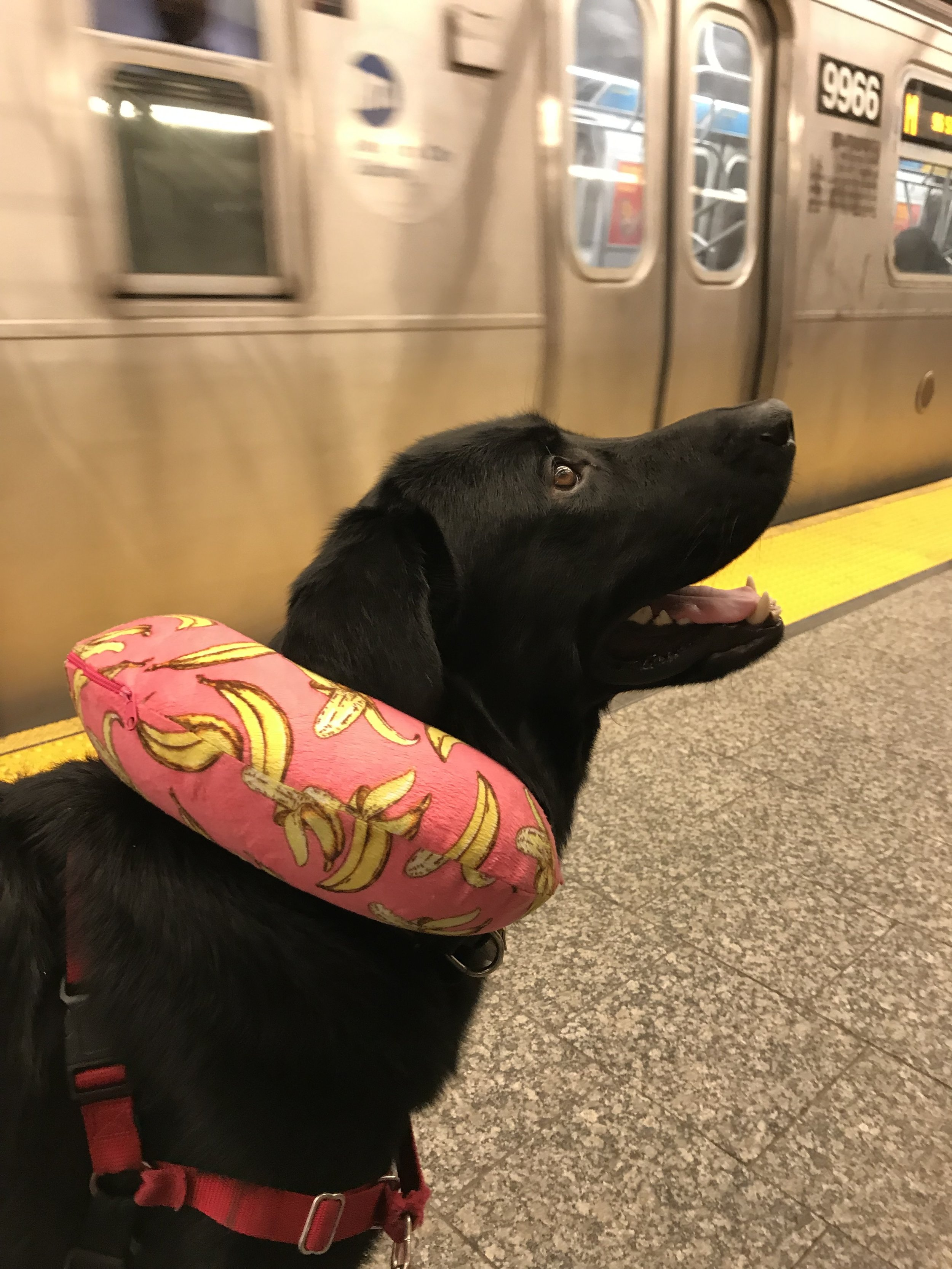 Biggie waiting for a train in a New York City subway station. I I Photo credit to Kirubell Asmamaw