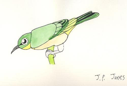 jpjbird1.jpg