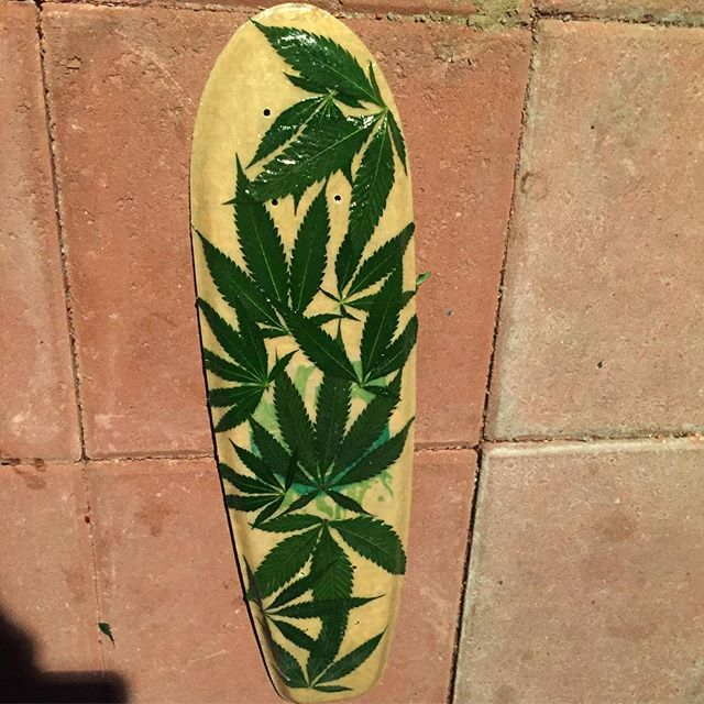 Introducing the High Roller With authentic Hemp leaves glassed in 😎 what's your feedback instagram?  #sustainable #hemp #skate #california #cannabis