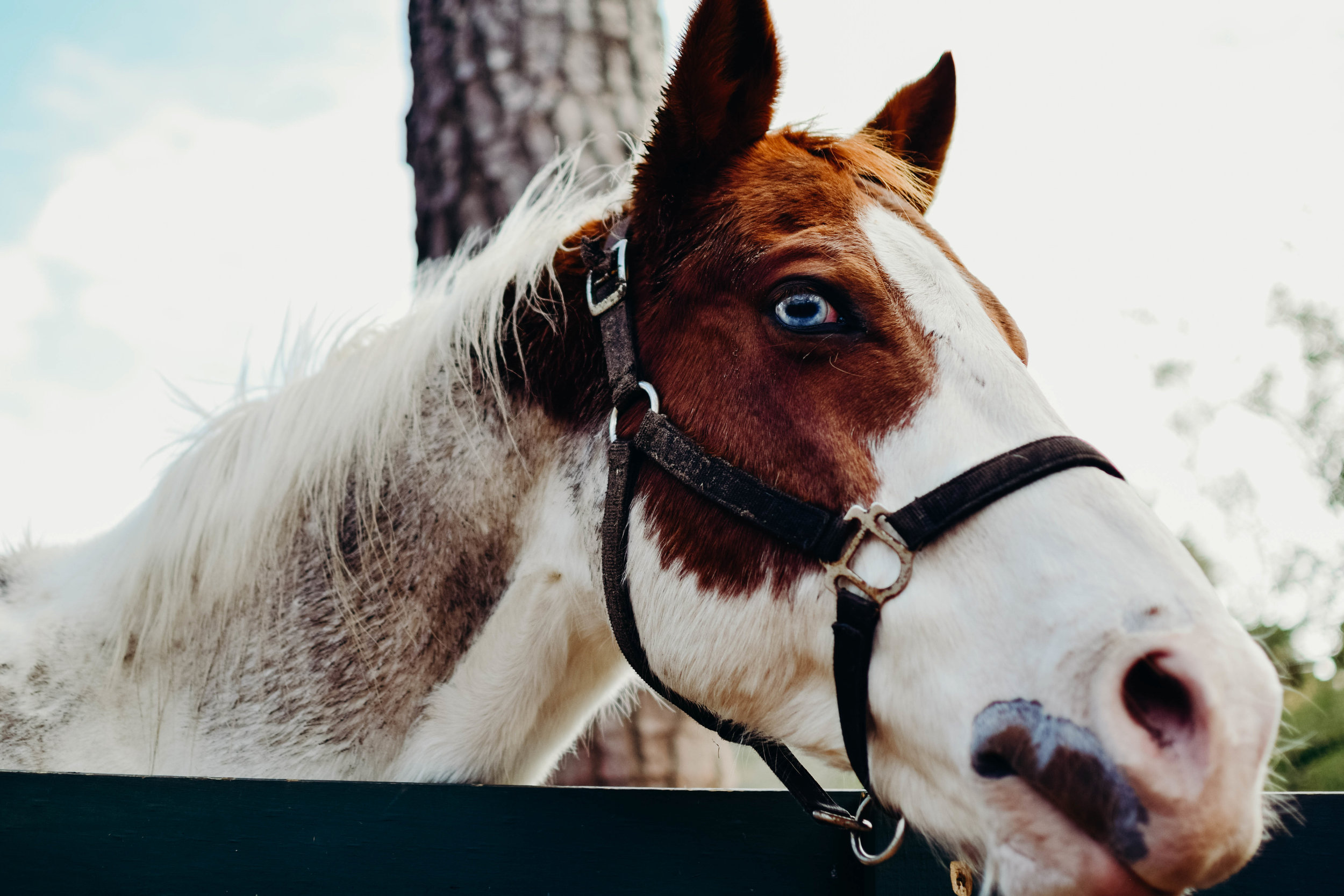 horse_pet_photography