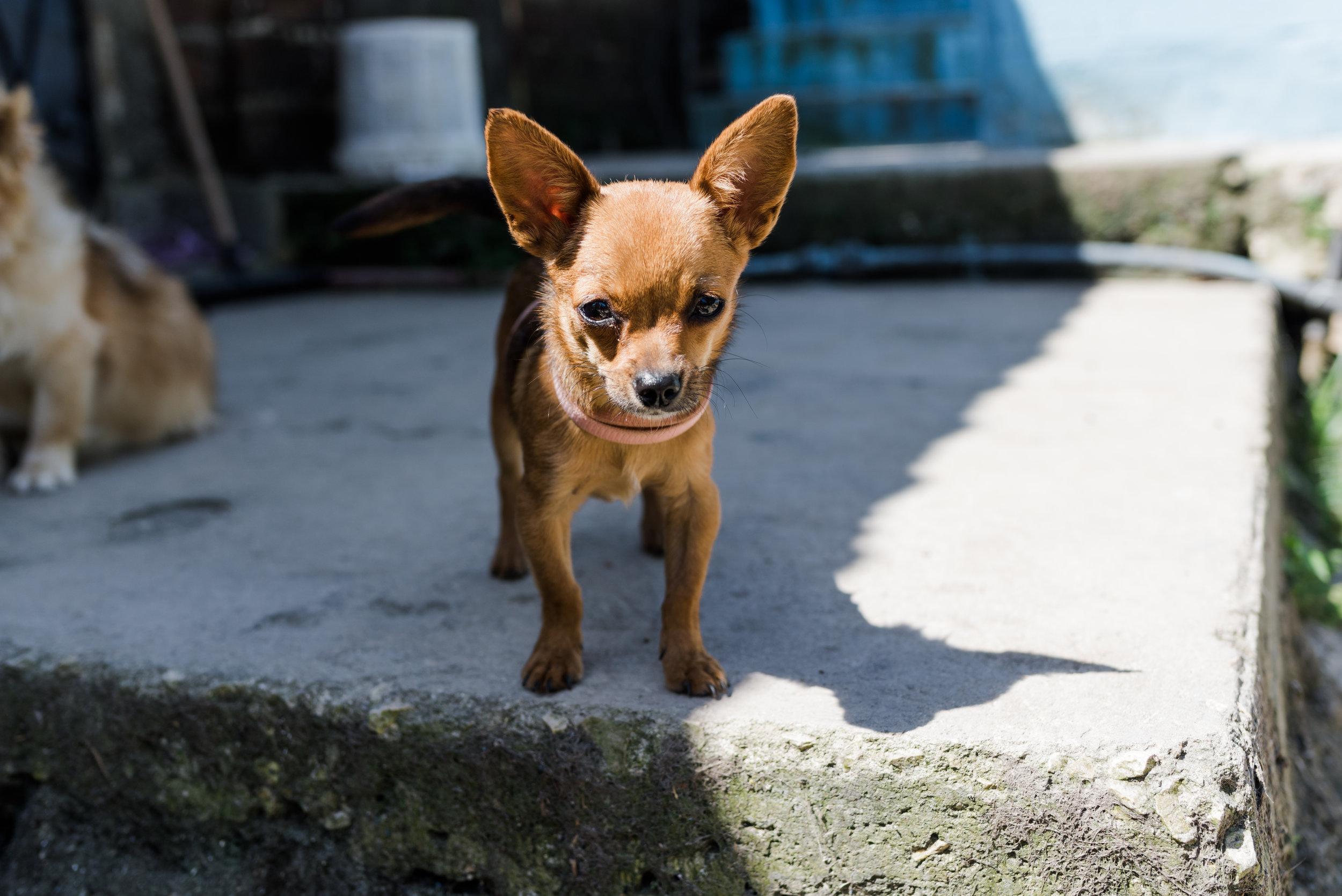 Cuba_dogs-120-21.jpg