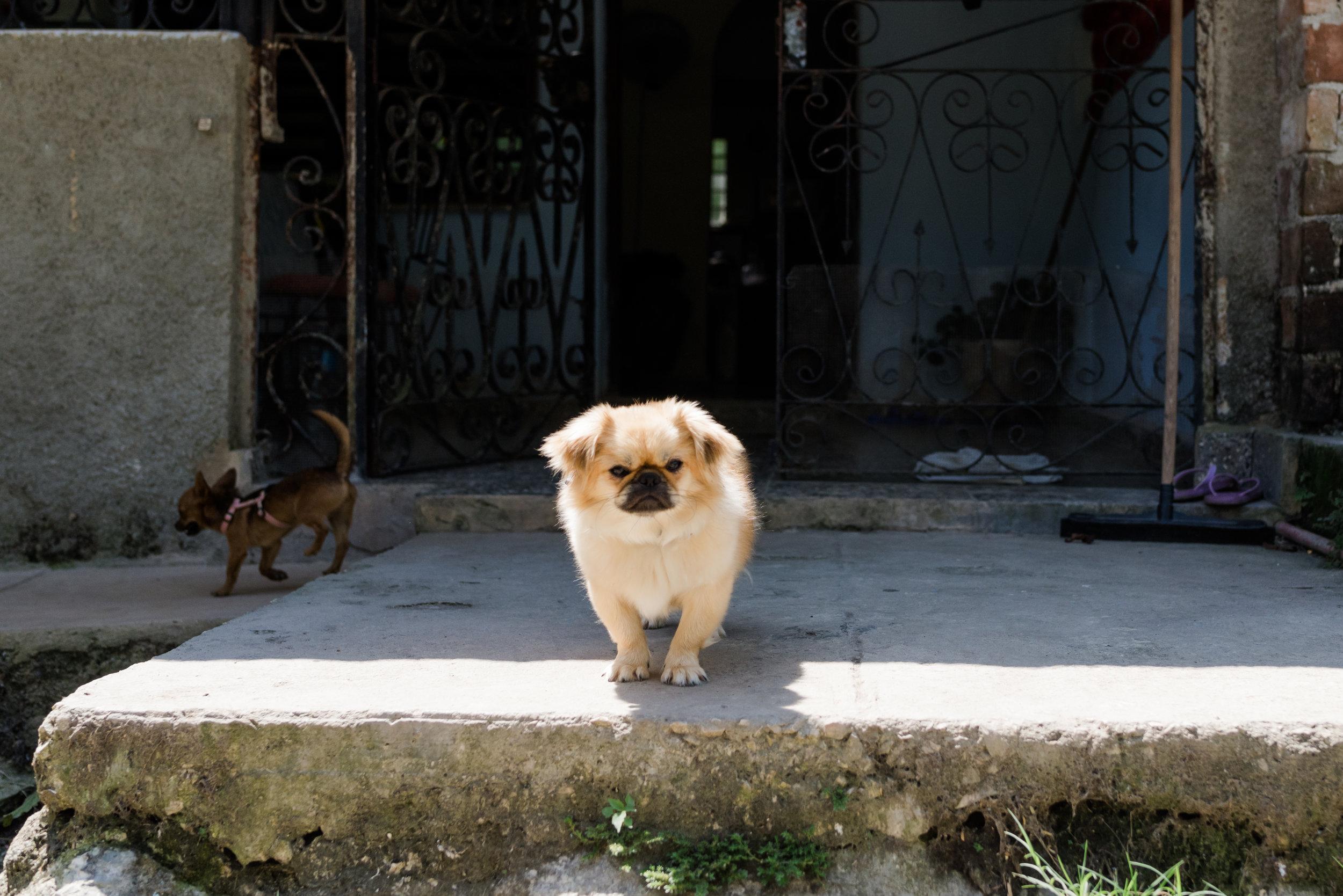 Cuba_dogs-120-20.jpg