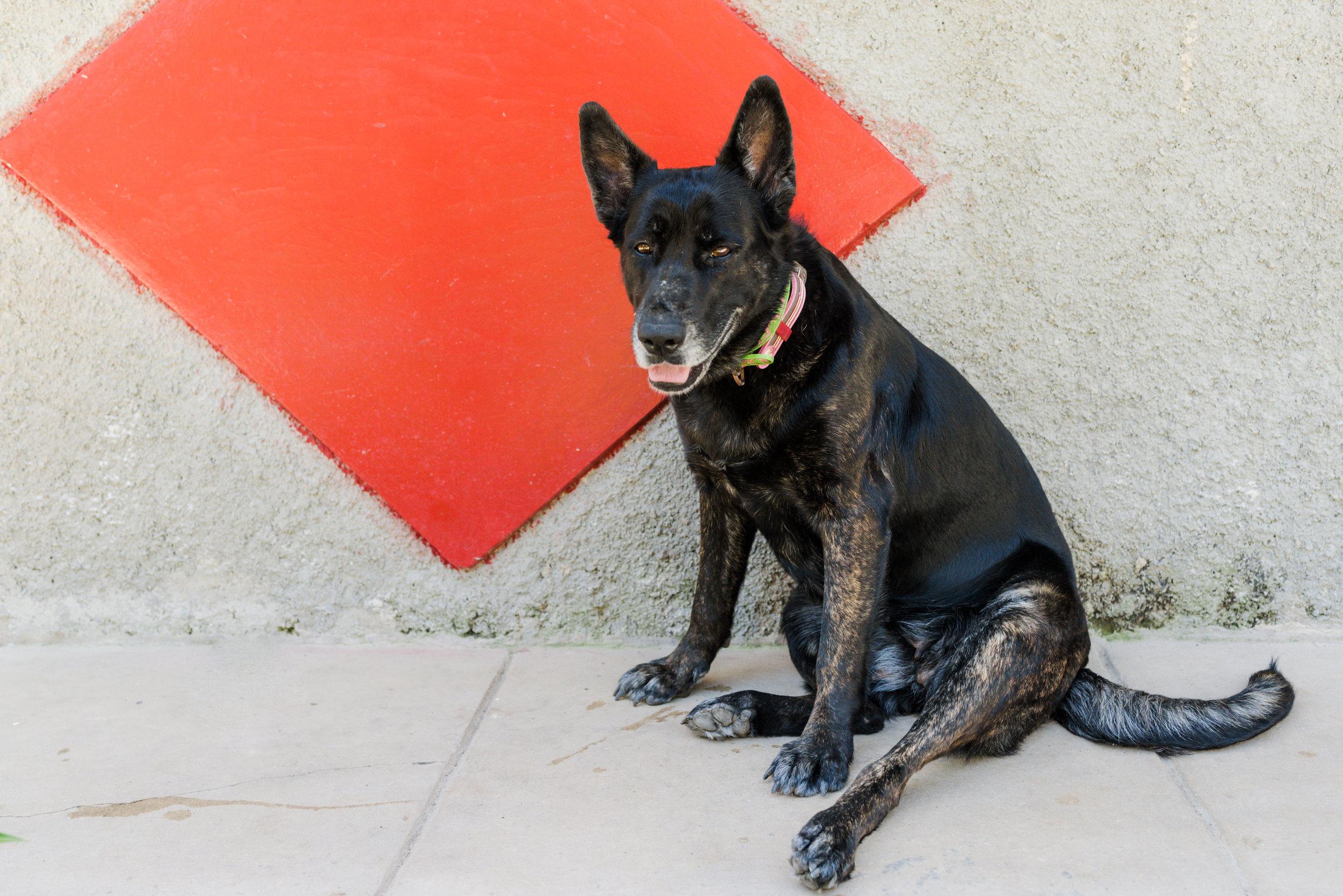 Cuba_dogs-120.jpg