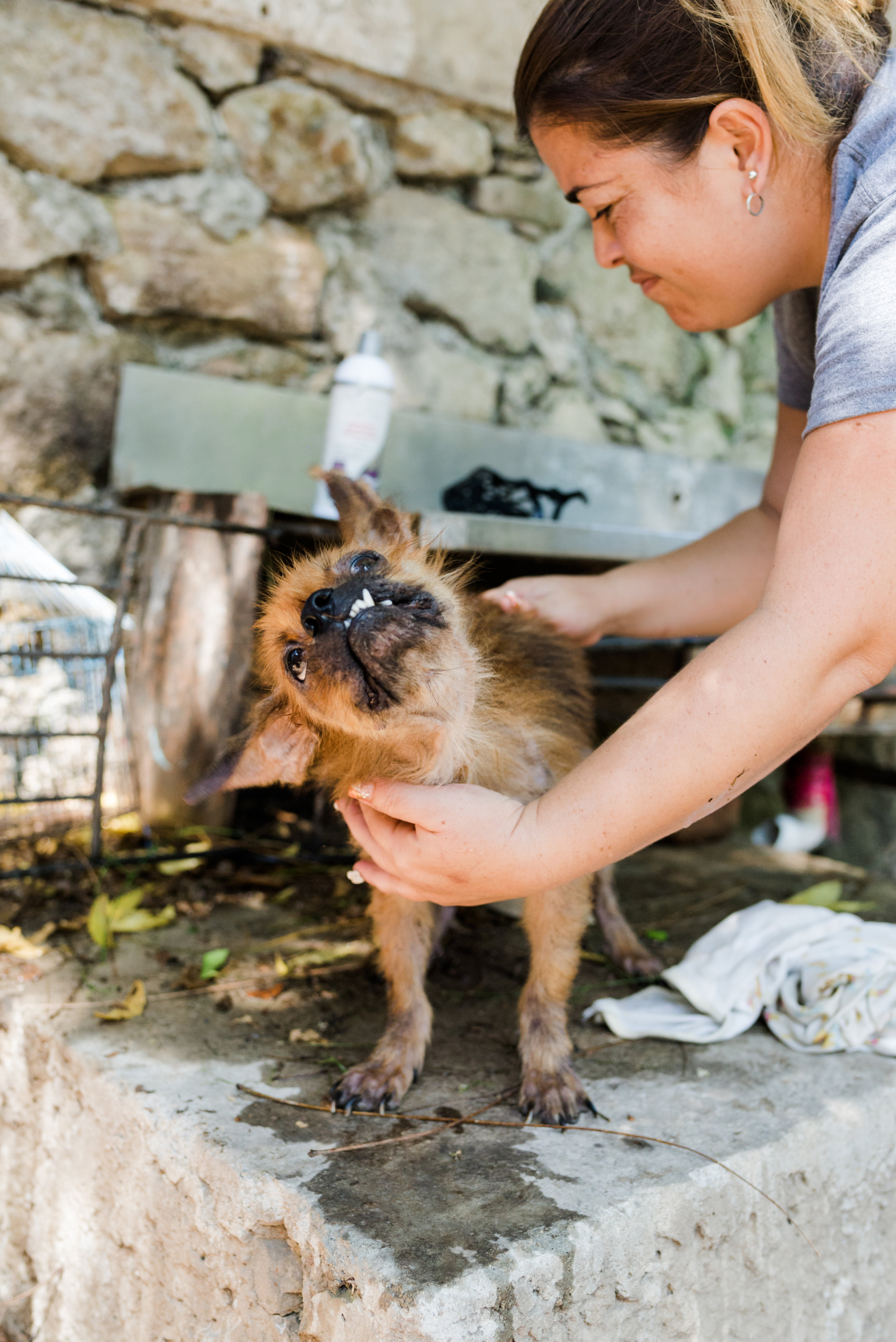 Cuba_dogs-120-13.jpg