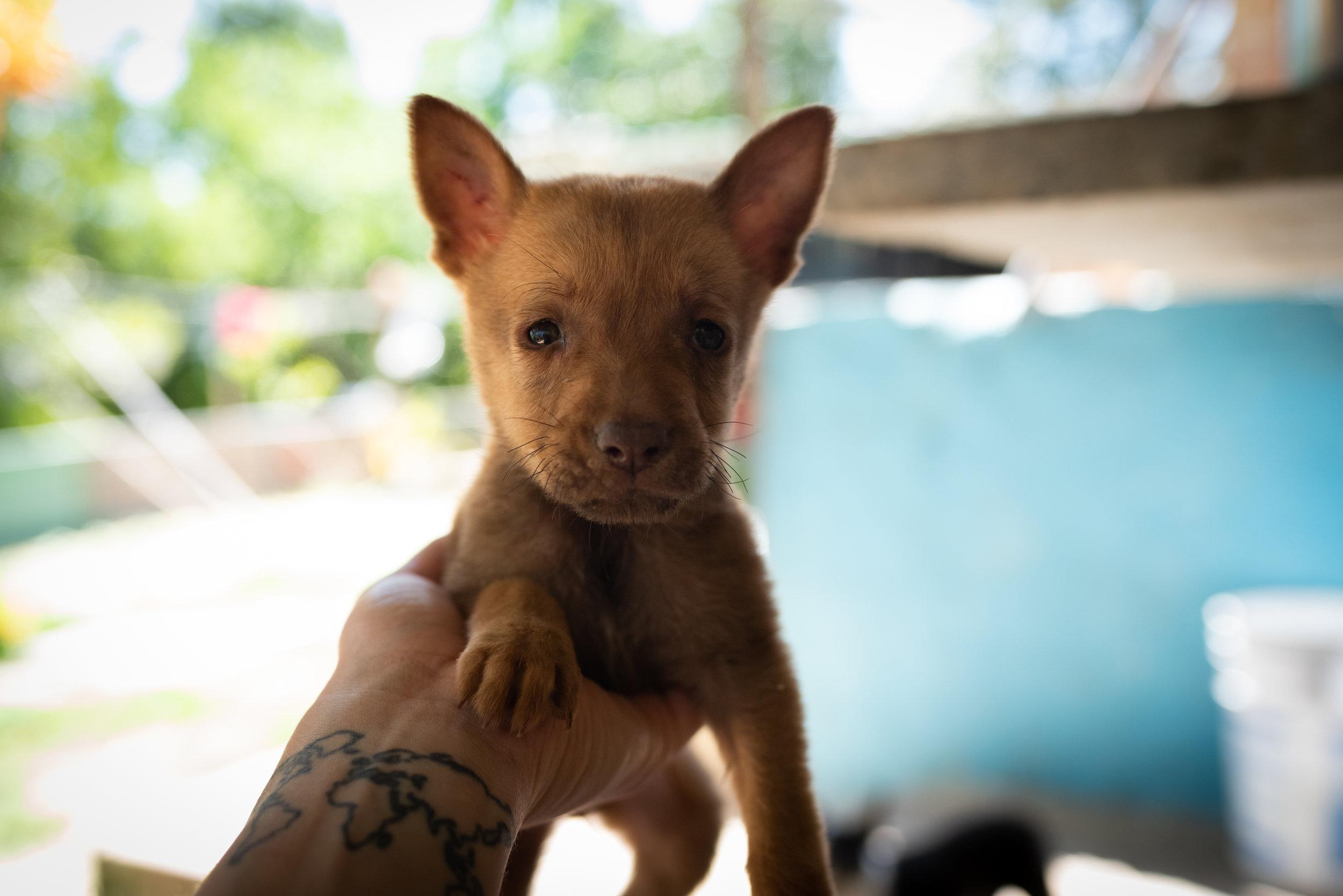 Cuba_dogs-120-9.jpg