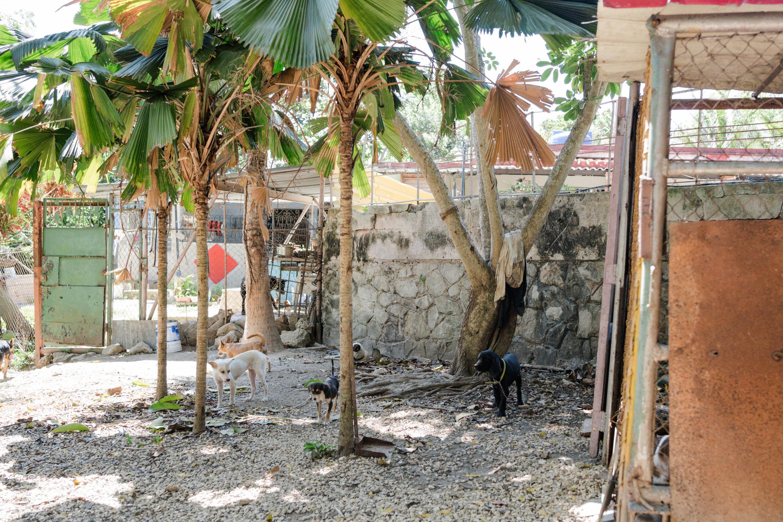 Cuba_dogs-120-10.jpg