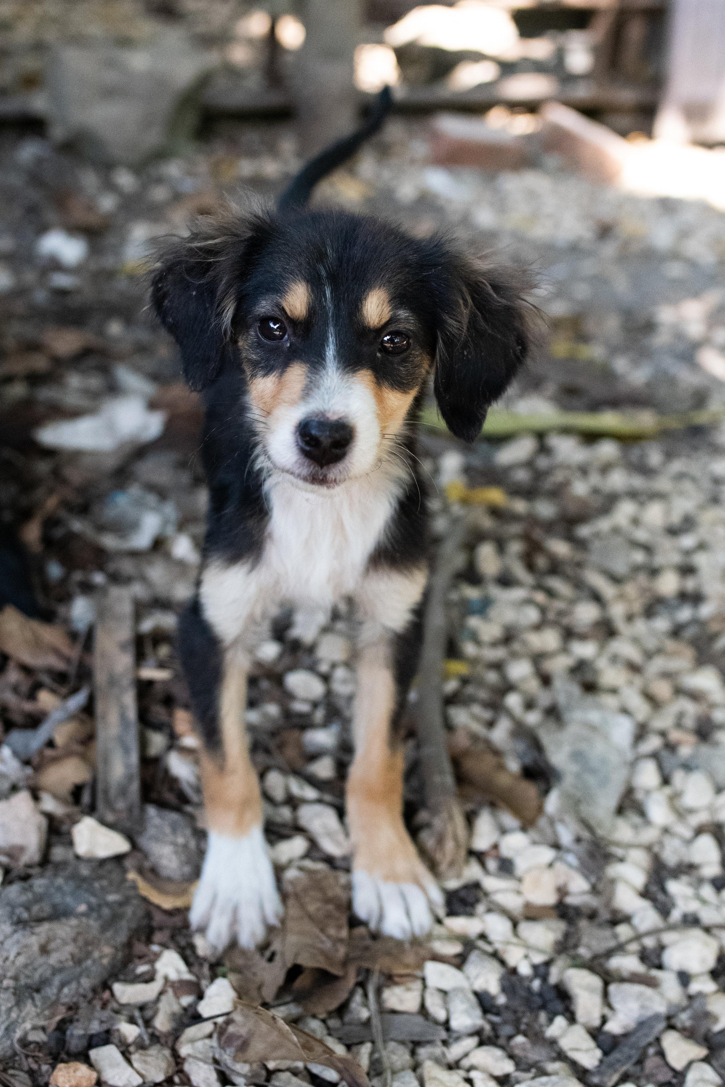 Cuba_dogs-120-5.jpg