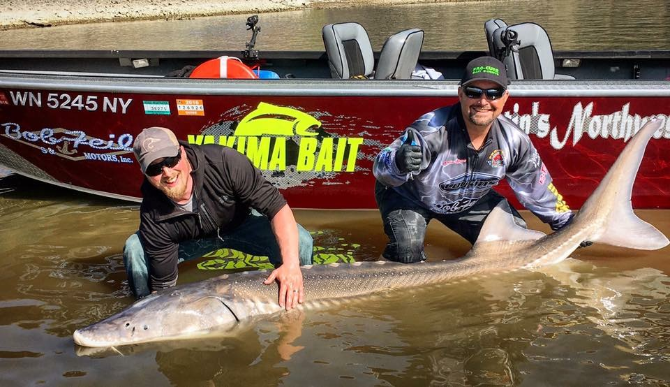 Sturgeon   February - August*   Keeper Sturgeon   May - July   Upper Columbia from McNary to Chief Joseph Dam    (*Oversized year round)