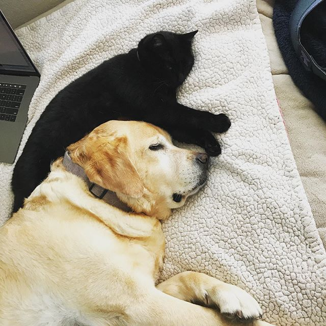 SOMETHING TO SMILE ABOUT My Service Dog  Edgar is like the mama to my two cats. They grew up cuddling and I love it when they still do it. They are medicine for each other.  #service dog#healing#best-friends#dog#cat