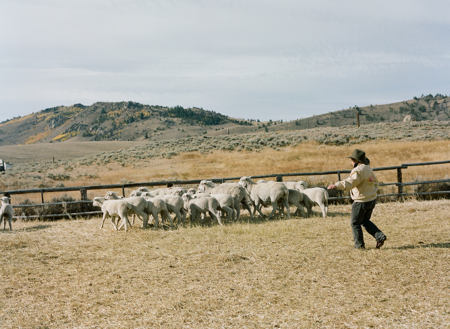 mickey_thoman_chapter_three_women_in_wyoming_herding_sheep_camp.jpg