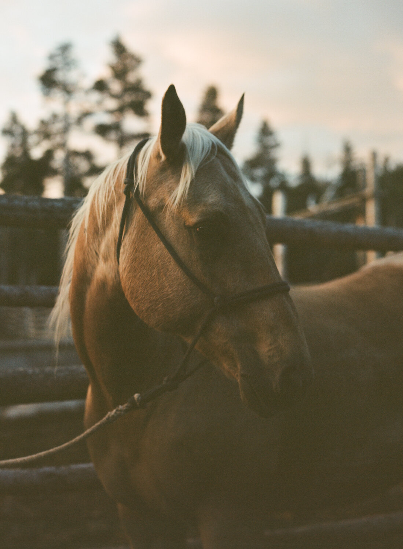 sunrise_diamond_4_wind_river_mountains_women_in_wyoming_pack_horse.jpg