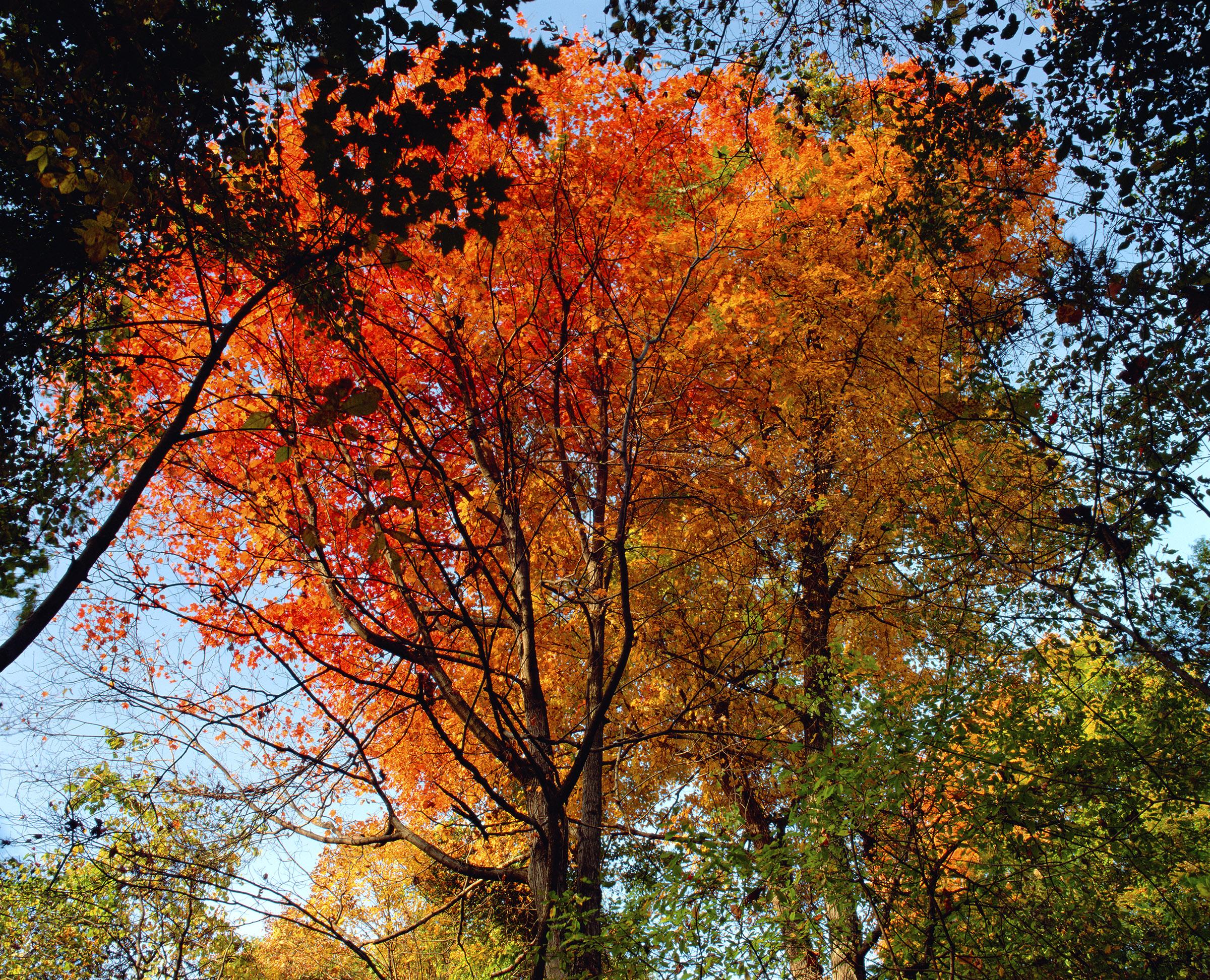 """""""Autumn Sugar"""""""