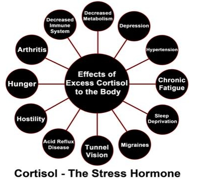 stress cortisol cycle.jpg