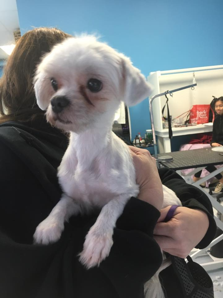 Wishbone came into the grooming school for a cleanup. He is currently available for adoption through the   Furget Us Not Rescue  .