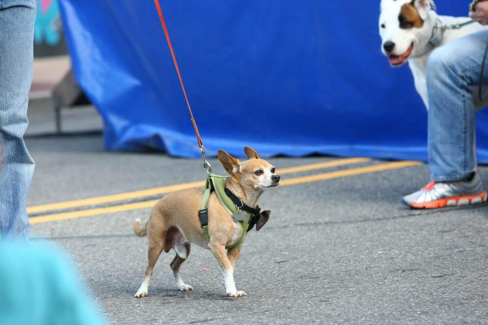 Dogs came dressed in their best bow ties to show off for the crowd on a beautiful summer day in Downtown Royal Oak.