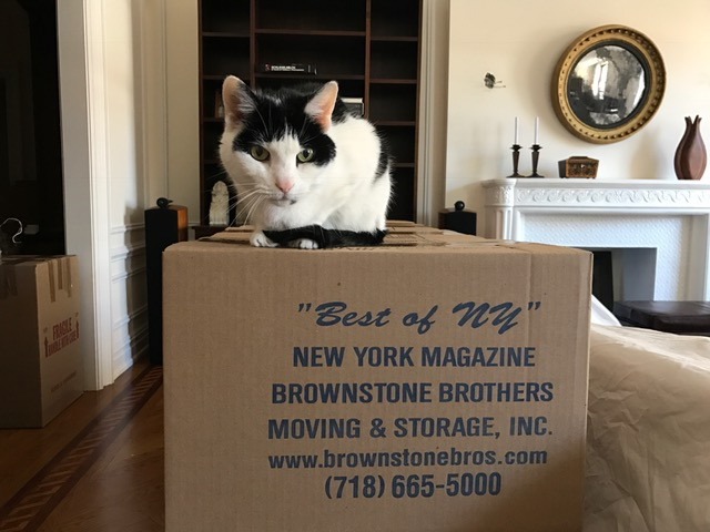 Treat your cat to a less-stressful move